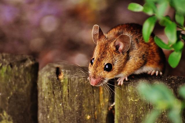 muizenverjager